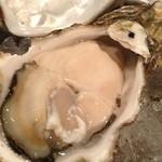 20743168 - 岩牡蠣