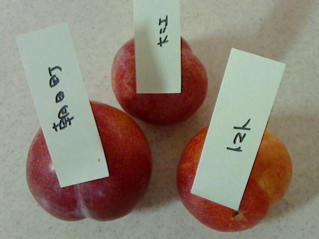 ファーマーズマーケット トマト 中山店