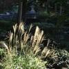 弁天茶屋 - 外観写真:11月初旬まではススキが秋風情を盛り上げてくれます。