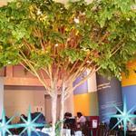 紅矢 - 大きな木を囲むような店内 英語の会話も聞こえてきます