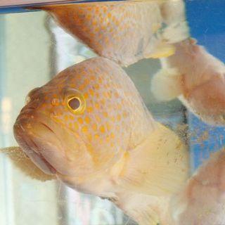店内・店外から見える水槽には、新鮮な魚が元気に泳いでいます!