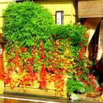 江戸東京小岩 創業昭和十一年 餃子の老舗 中華料理 永楽 - 昼間の外観