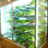特注の野菜専用冷蔵庫を完備しており、鮮度と味を保って美味しく健康な野菜を提供します!