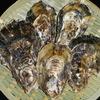 海男 - 料理写真:美味でとても美味しい竹崎牡蠣
