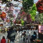 掛川花鳥園 - バイキング会場は南国の雰囲気