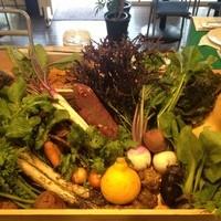 自然循環型オーガニックファーム『ぴたらファーム』の有機野菜
