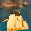 ペンギンのいるBAR - その他写真:ペンギンの夫婦は固い絆の象徴です