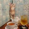ネコ リパブリック - 料理写真: