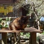 天園休憩所 - 看板猫にゃ♪ ようこそ♪