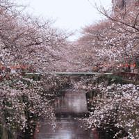 中目黒の桜並木からすぐ!