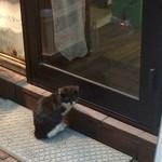 焼肉いつものところ - 夜になると、寒さに耐えかねた子猫が、当店のライトで体を温めに来ます。