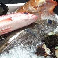 【自慢の鮮魚】お魚に恋をして…産地直送鮮魚が自慢♪