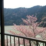 ドライブイン長谷川 - 窓から桜が。