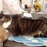 猫がいるカフェ - 「みずむ」はけして動かない