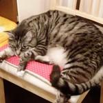猫がいるカフェ - 「ロラン」は少し動く