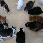 猫カフェ わが家 - おやつタイム