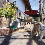 猫ちゃんおもてなしの宿 オーベルゼ レ・ボー - ススとアラシ(^^)