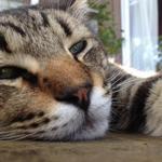 猫ちゃんおもてなしの宿 オーベルゼ レ・ボー - 料理写真:ヨリ男くん(^^)