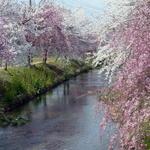 そば蔵 谷川 -