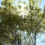 和カフェスペース - 数年したら素晴らしい樹木になります