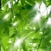 得月楼 - その他写真:季節イメージ(新緑)