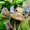 GA倶楽部 - 料理写真:ブロッコリーとアサリの塩炒め