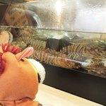 27127995 - カウンターの水槽には生きたエビさんがいっぱい。                                              ちびつぬ「なんか、こわいわ~」