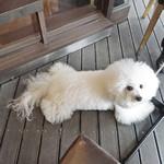 中華香彩JASMINE - 貴重なワン OK〜♬ 一席!!