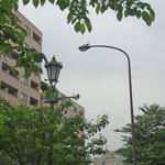 中華香彩JASMINE - 街灯の上に鳩のカップル発見