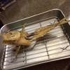 たぬき - 料理写真:なめろうでおろした鯵の骨をサービスで唐揚げにしてくれます。
