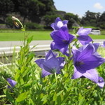 29142355 - お庭には季節のお花が。
