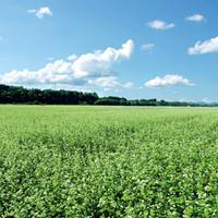 季節で最高の『国産そば粉』を使用