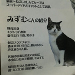 猫がいるカフェ - おデブ猫ちゃん