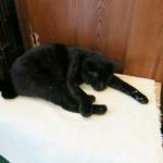 そば所 よし田 - キャッシャー前の黒猫は昼寝中