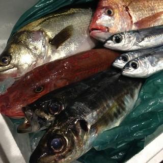 三崎港から直送の新鮮な鮮魚をその日の調理法で