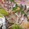 魚魚 - メイン写真: