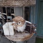 トワモワカフェ - 外の鳥かごにフクロウ*