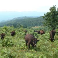 三ヶ所の契約牧場より厳選した神戸牛