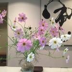 31861413 - 秋桜