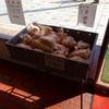 自家製パン屋 日の出屋 - 料理写真:ワゴンセール⁉