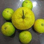 暁山 - お土産の酢橘・柚子@2009/11/21
