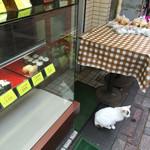 蒲田屋 - 例の猫ちゃんです