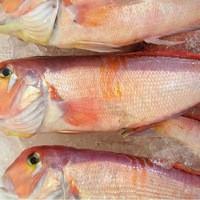 原始焼・二代目・魚々子 - 甘鯛