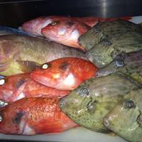 旬のお魚と厳選のお酒をゆったりとお楽しみいただけるお店です。