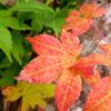 開拓 ふくろふ乃湯 - 料理写真:秋は紅葉もきれいだった!