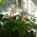 和光ティーサロン - この日の朝〜開いたバラ一輪