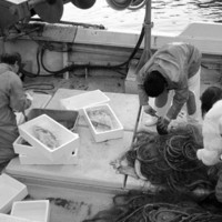 産地直送!三浦半島の漁師さんから旬の魚を直接買付け店舗へ