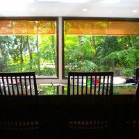 キッチン イトウ スタイル - カウンター席から新緑を眺めて