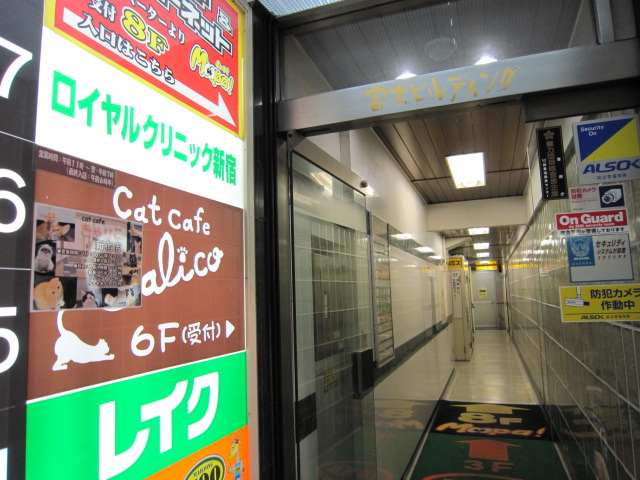 猫カフェ  きゃりこ 新宿店