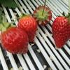 赤保子農園 - 料理写真: